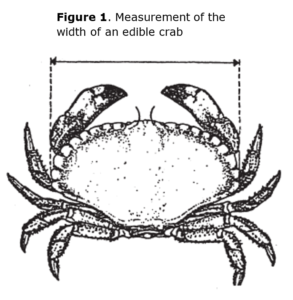 Crab_min_Size