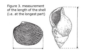 molluscs_min_size